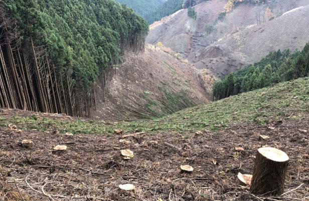 公共工事伐採等